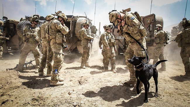 Service Dogs For Soldiers Inc